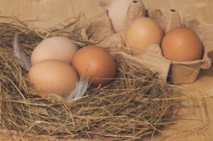 nest, chicken eggs, brown